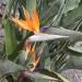 Fleurs fascinantes