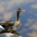 Le Teich Parc Ornithologique