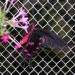 Les Papillons du Jardin du Monde