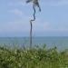 Curiosité de la nature sur la côte
