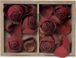 medium_roses.2.jpg