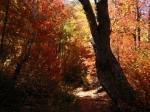 medium_soleil_automne.jpg