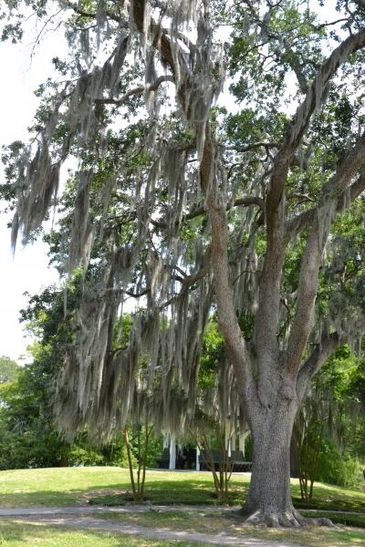 audubon,parc,new,orleans,louisiane,sud,usa,nature,arbres,écureuils,promenade,mousse,espagnole