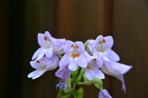 montréal,fleur,jardin,botanique,orage,pluie