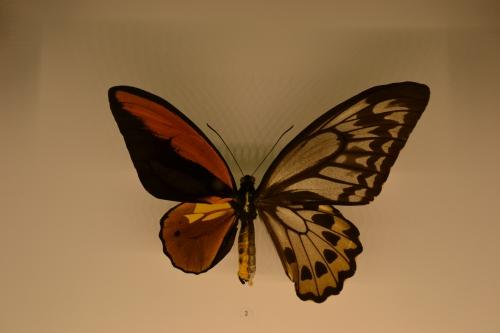 montréal,voyage,cité,papillon,jardin,botanique,hermaphrodite