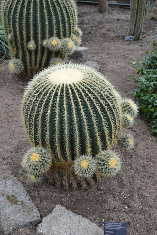 montral,cactus,jardin,botanique,orage,pluie