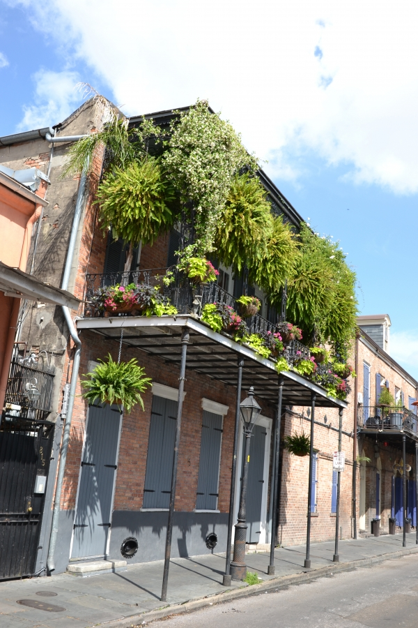 maison,french,quarte,nouvelle,orléans,végétation