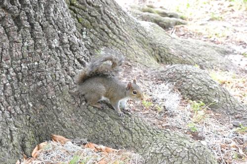 audubon,parc,new,orleans,louisiane,sud,usa,nature,arbres,écureuils,promenade,snowball
