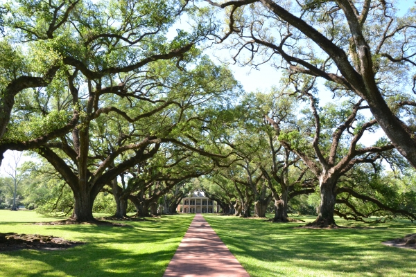 louisiane,plantation,sud,usa,canne,sucre,mississipi,chênes,oak alley